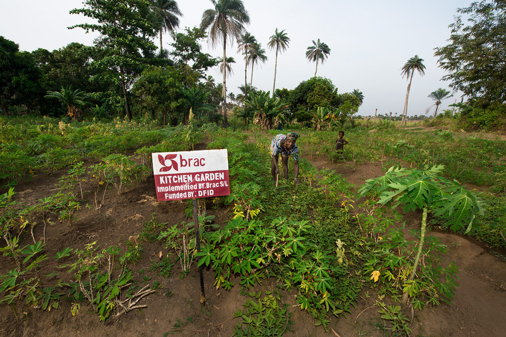 Kitchen garden in Sierra Leone