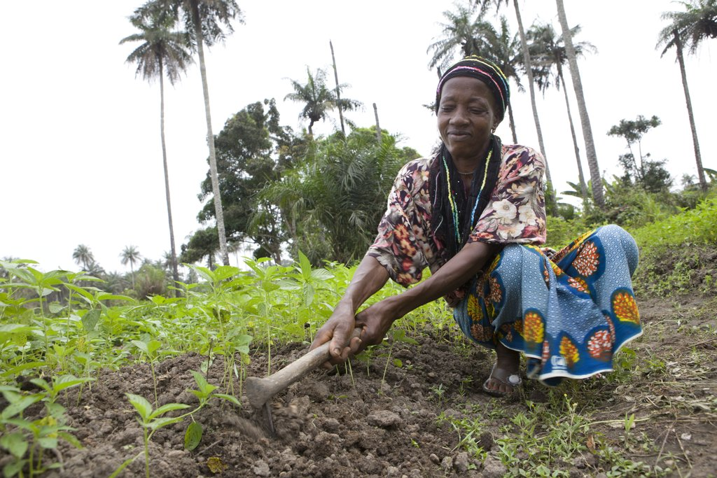 Support Family Farming in Liberia and Sierra Leone