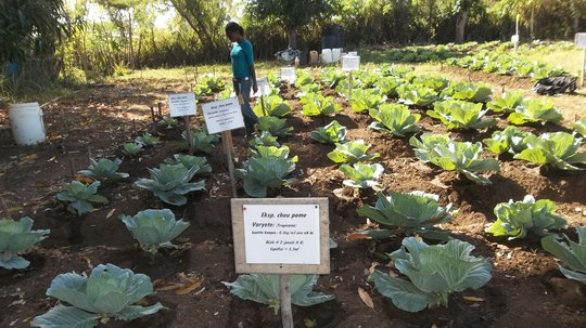 Generating Organic Compost for Farming in Haiti