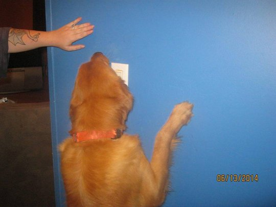 Simba turning on a light switch