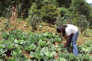 Help Colombian Farmers Defend Their Livelihoods
