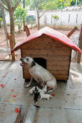 Estrellita and her new puppies