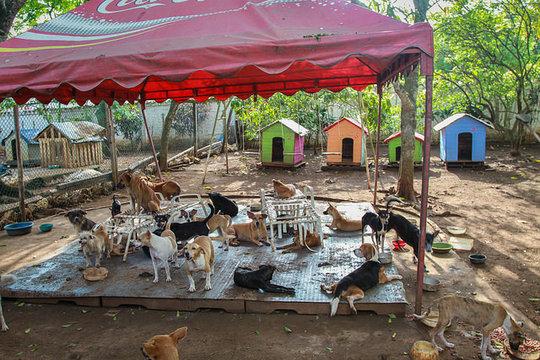 Dogs & the GlobalGiving dog houses!