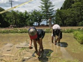 Planting rice in front of MORIUMIUS