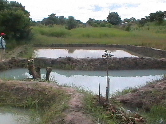 fish farming skill development among young people