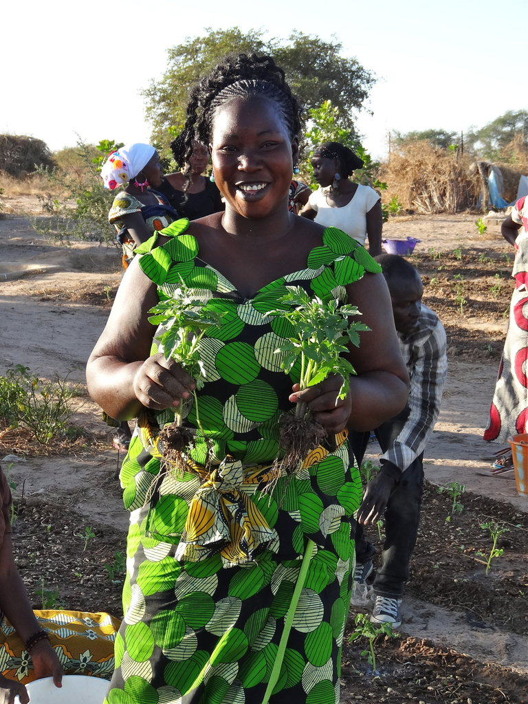Economic Self-sufficiency for 280 Senegalese Women