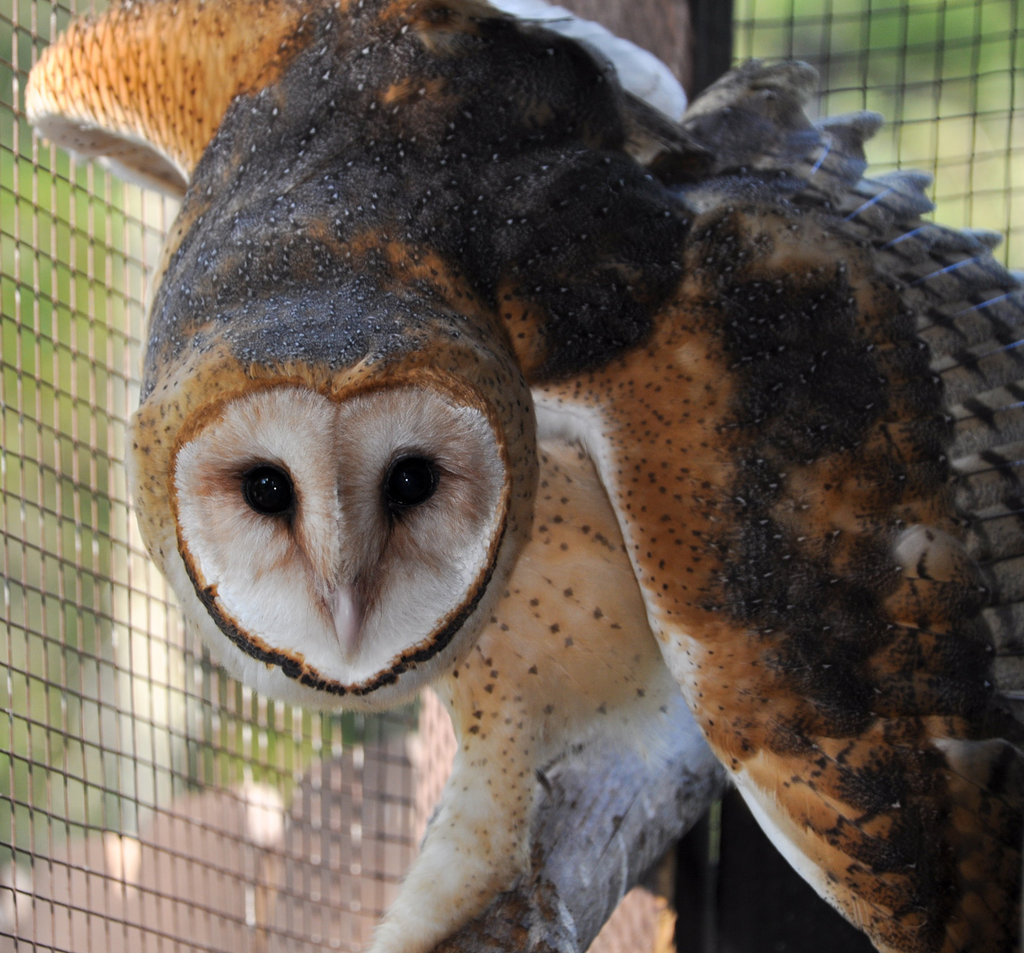 Rehabilitate Mammals and Raptors in Georgia