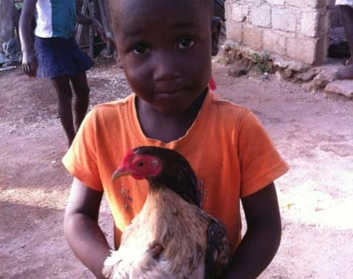 Egg Laying Hens for Haitian Families