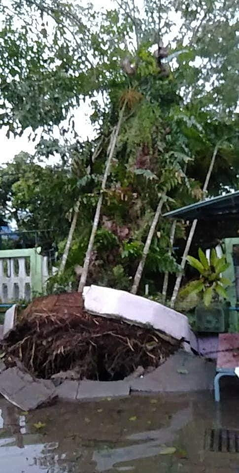 Uprooted Trees Damaging Nearby Walls