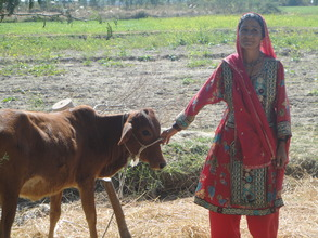 Hameeda with the calf of her cow