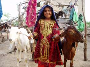 Goats are a good source of income generation