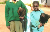 Chicken Businesses for AIDS Orphans