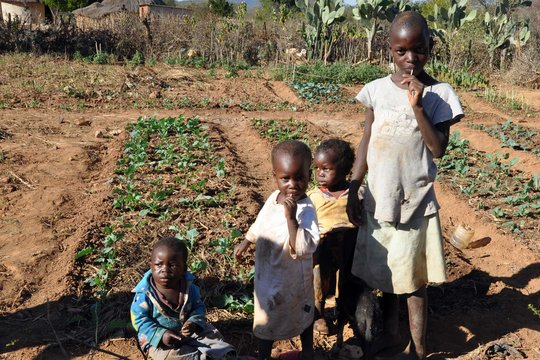 Seeds Will Change the Lives of Children
