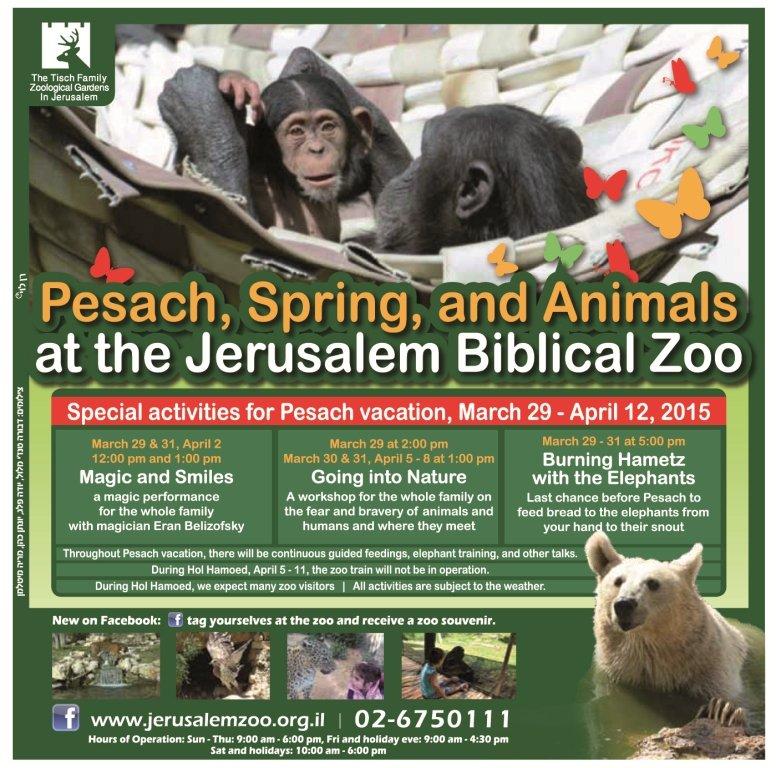 Passover Activities