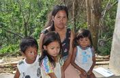 Upland Forest Rehabilitation Project