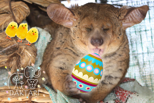 Easter Gift - Special Animal Donation