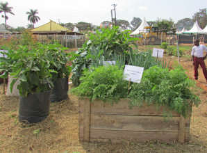 Ideas from Jinja Showground Show: gardens & more