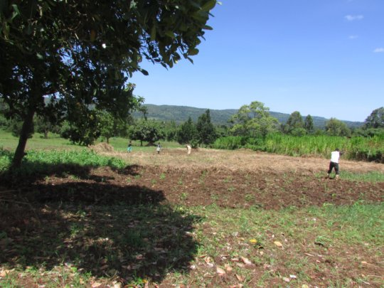 Women weeding their crops on new land - May 2016