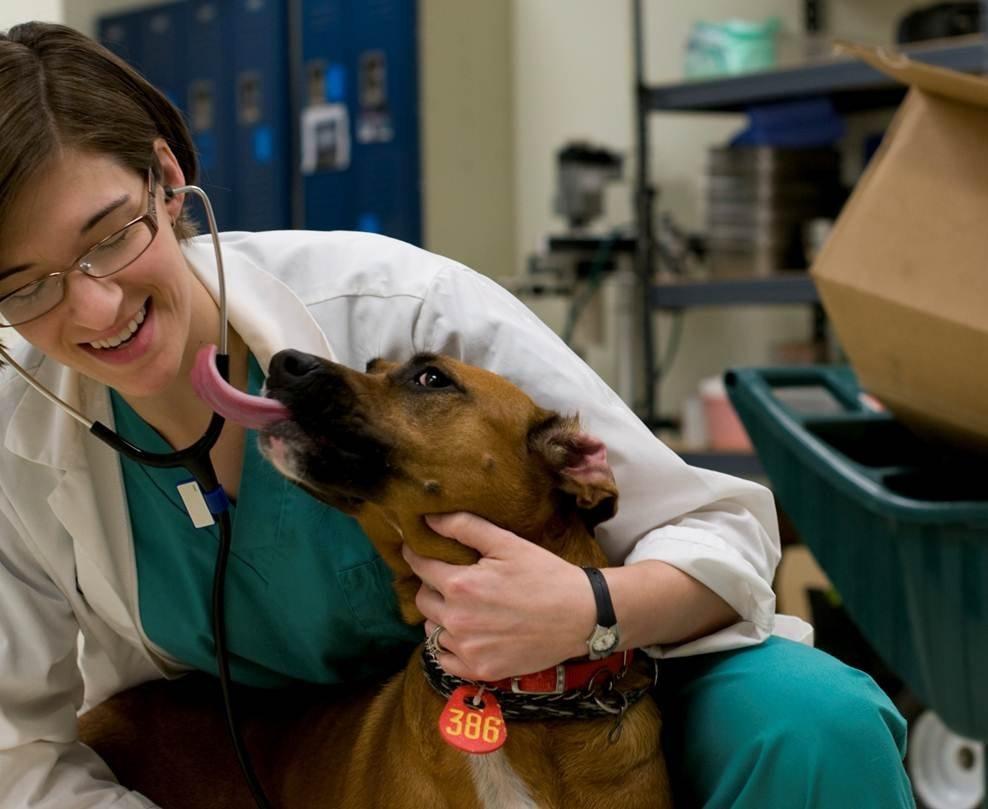 Life-Saving Medical Equipment for Spay/Neuter