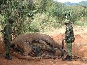 Warning: Elephant Carcass