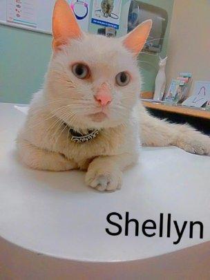 Shellyn