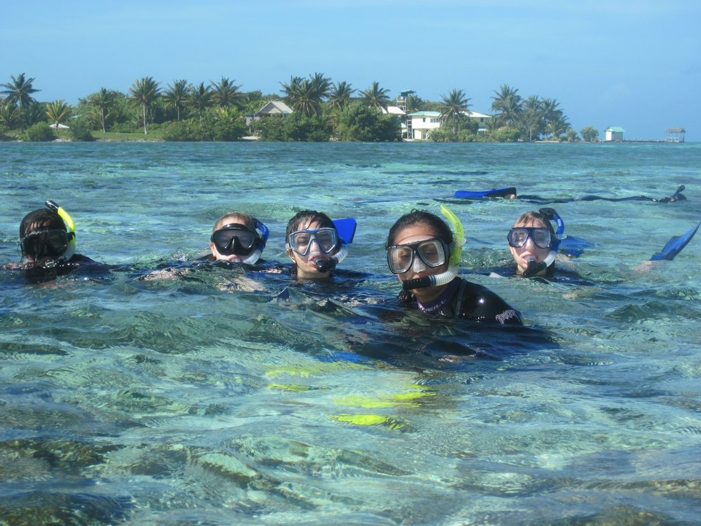 belize barrier reef platform essay Integrated with sharepoint provides a rich reporting platform lets  college app essay  the atlantic barrier reef ecosystem at the carrie bow cay belize.