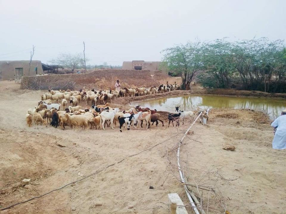 A pond formed from borehole provides for livestock