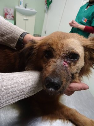 dog treated free of charge for tumor