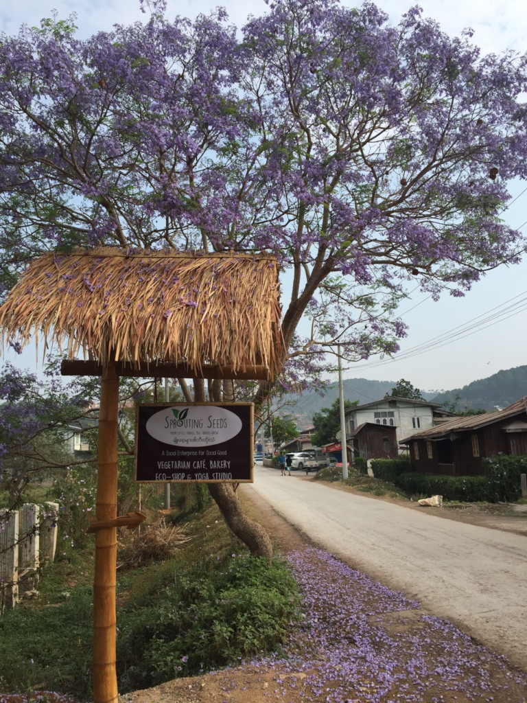 Jacaranda trees grace the entrance of the new cafe