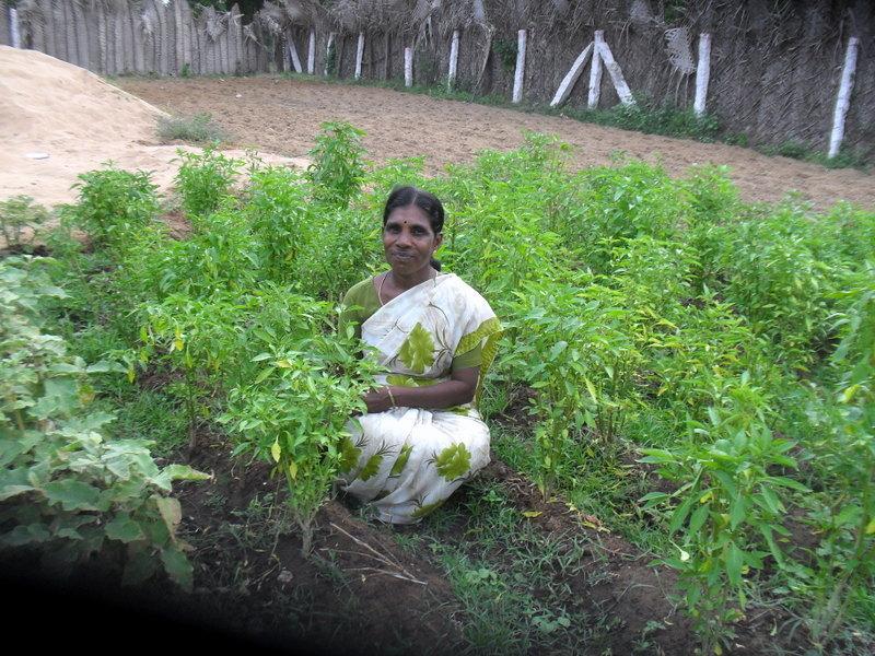 Ms.Sareswathidevi in her kitchen garden