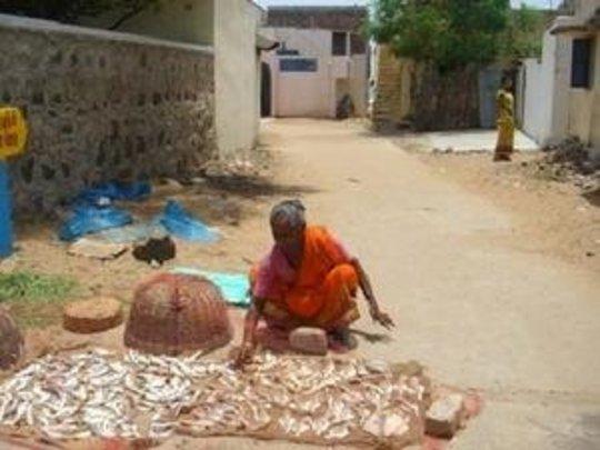 Women making dry fish