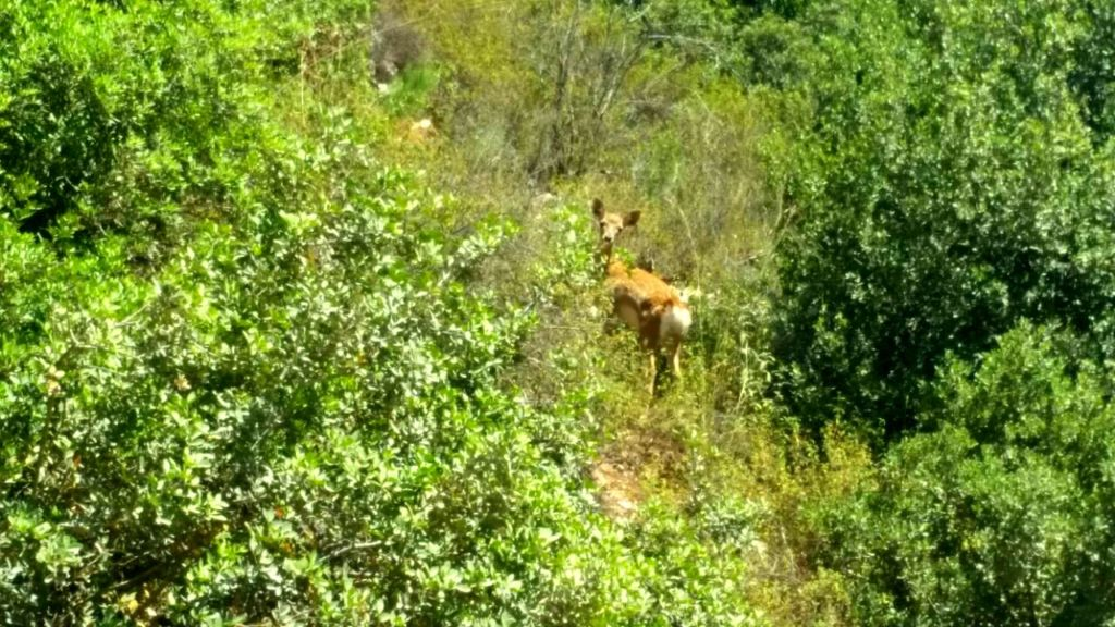 A wild-born fawn is spotted near Jerusalem!