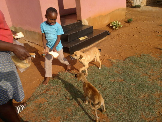 Spade dog & not spade dog - from same homestead