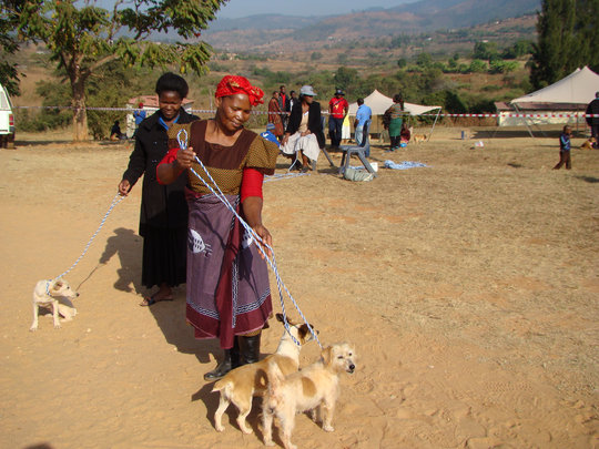Make Ceko and her dogs