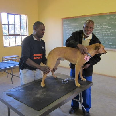 Sam checking Mr. Dlamini's dog Teddy
