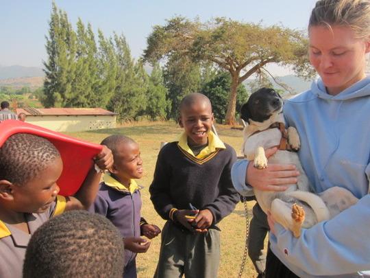 Sharing Vusumnotfo's dog Ziggy