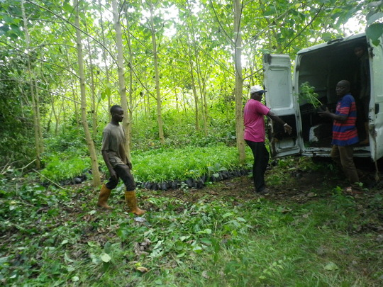 First batch of Moringa seedling transported in van