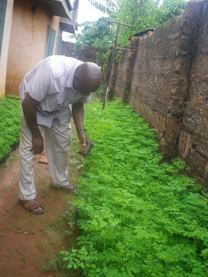 Project Manager inspecting Moringa in the Nursery