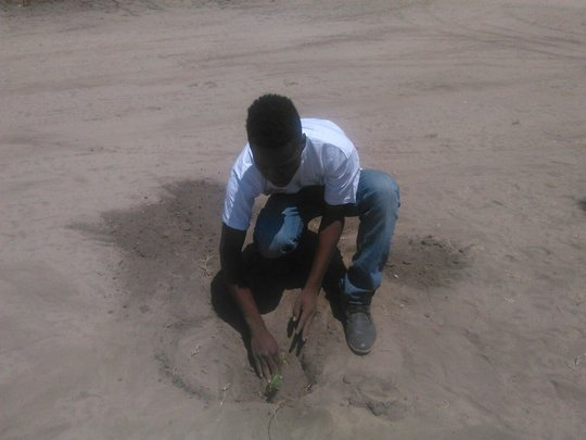 Mbanga Planting