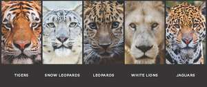 The big cats represented at the gathering (PDF)
