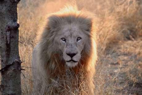 Big Cat Conservation: A Global Alliance