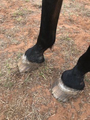Feet prior to the farrier visit