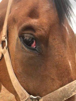 Limited eyesight in damaged eye