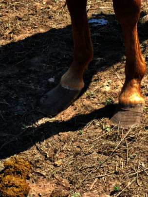 Terribly overgrown hooves