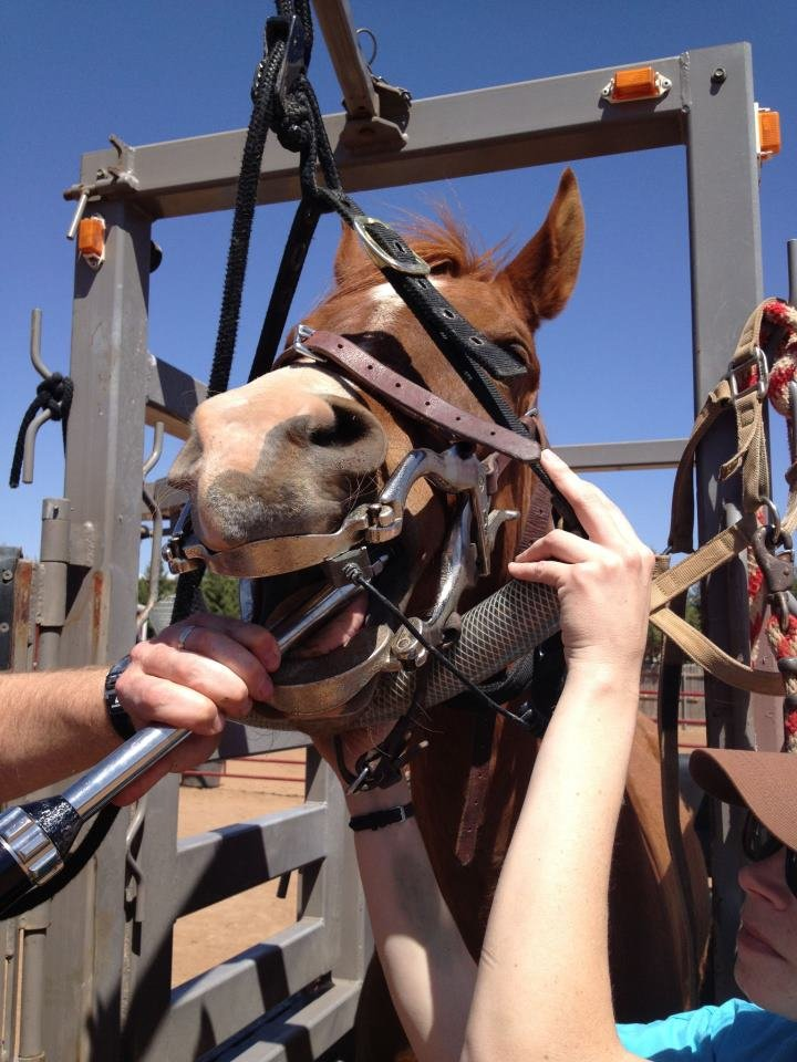 Provide Quality Care for Rescued Horses in Texas