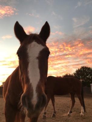 Samson and a West Texas Sunset