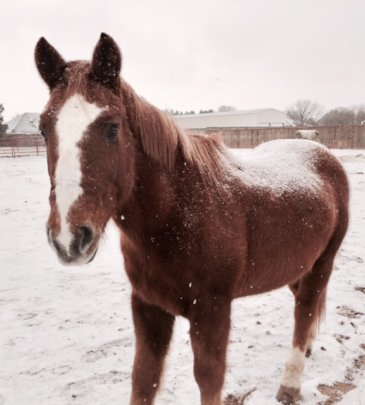 Enjoying the winter snow