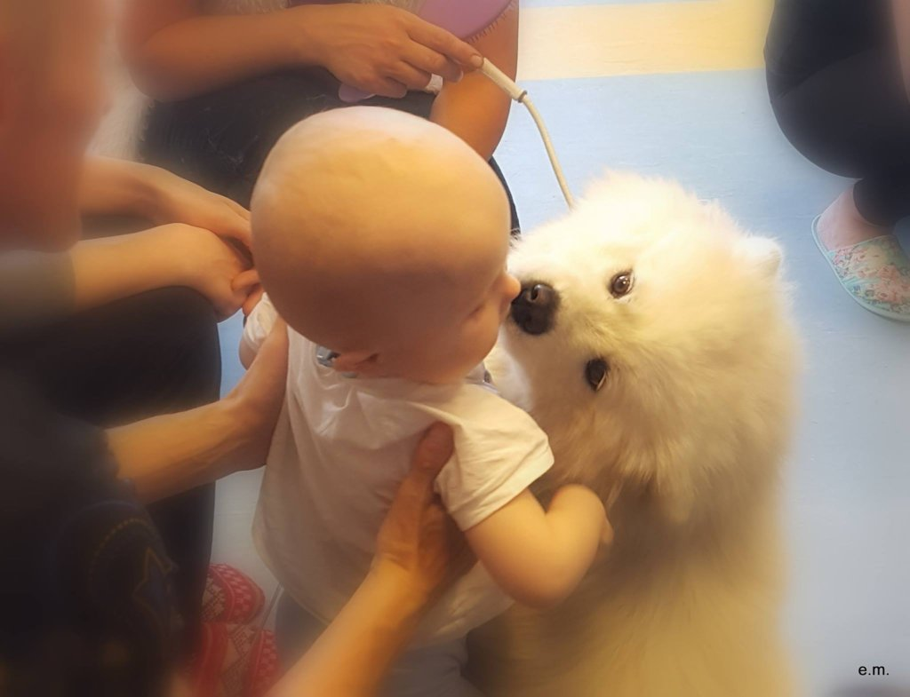 Kisses from little friend (Canterapy dog)