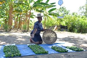 Growing food in Haiti