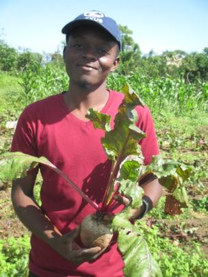 Harvesting beets grown in SOIL compost
